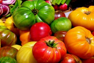 Tips for growing your own tomatoes
