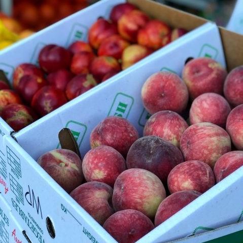 Fenton Farm Fresh - Barossa Farmers Market stallholder